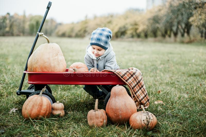 Happy little toddler boy on pumpkin patch on cold autumn day, with a lot of pumpkins for halloween or thanksgiving. Kid on pumpkin field on cold autumn day stock photography