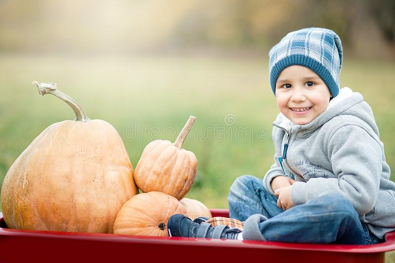 Happy little toddler boy on pumpkin patch on cold autumn day, with a lot of pumpkins for halloween or thanksgiving. Kid resting on pumpkin picked out at farm royalty free stock photos
