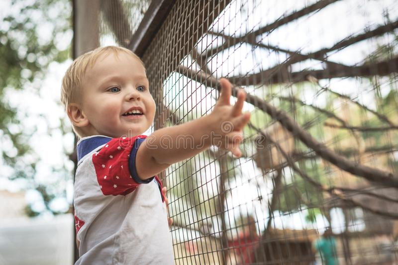 Happy little toddler boy 3 years, smiling watching animals at the zoo on sunny summer day royalty free stock images