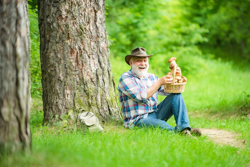 Happy man holding a freshly picked mushroom. Gathering Wild Mushrooms. Grandfather with basket of mushrooms and a royalty free stock images