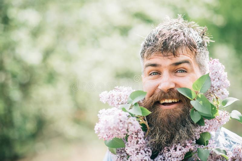 Happy man with lilac in beard. Bearded man smile with lilac flowers on sunny day. Hipster enjoy scent of spring blossom royalty free stock photos