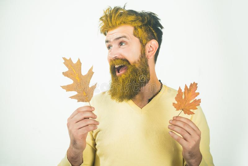 Happy man playing with leaves on a white background . Fall happy. Background with autumn leaves. Autumn sale royalty free stock photos