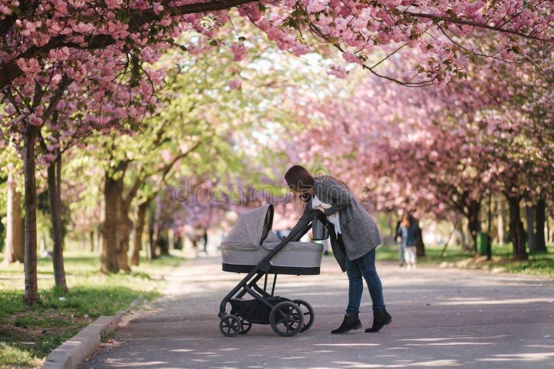 Happy mom walk with her little baby girl in stroller. Background of pink sakura tree stock photos
