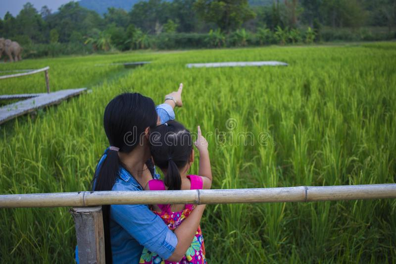 Happy Mother and her child play outdoors having fun, and pointing at something in the Green rice field. High resolution image gallery stock images