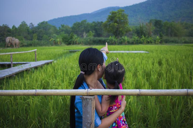 Happy Mother and her child play outdoors having fun, and pointing at something in the Green rice field royalty free stock photo