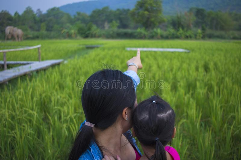 Happy Mother and her child play outdoors having fun, and pointing at something in the Green rice field. High resolution image gallery royalty free stock images