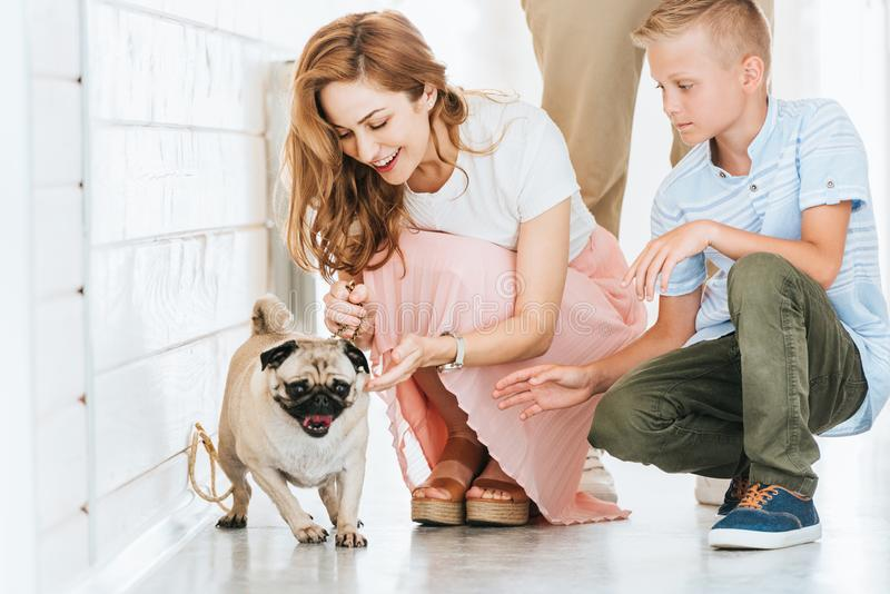 Happy mother palming adopted pug dog in corridor of at animals. Shelter royalty free stock images