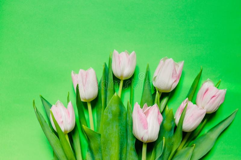 Happy mother`s day, pink tulips on green background. greeting card concept. spring flowers flat lay.Mother`s Day royalty free stock image