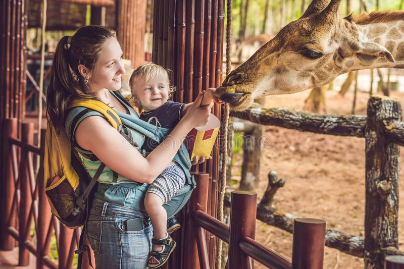 Happy mother and son watching and feeding giraffe in zoo. Happy family having fun with animals safari park on warm summer day.  royalty free stock photography