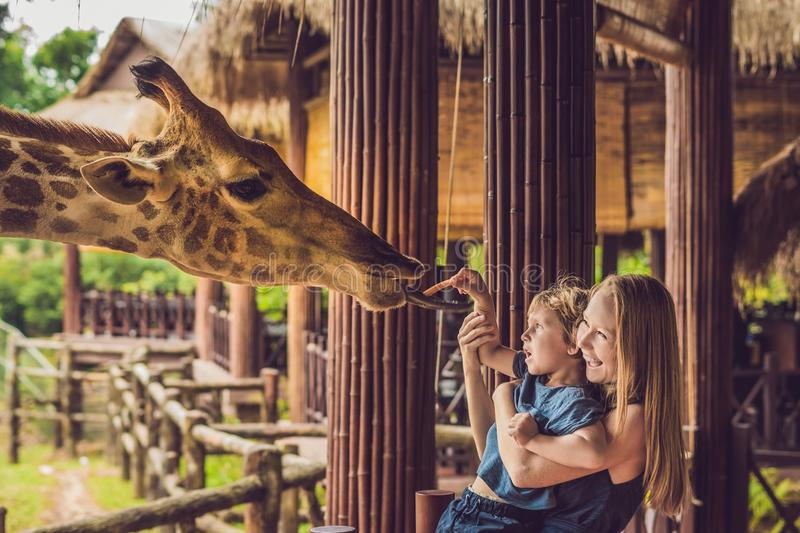 Happy mother and son watching and feeding giraffe in zoo. Happy family having fun with animals safari park on warm summer day stock images
