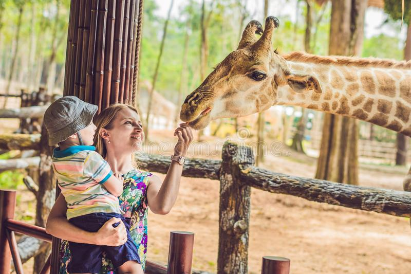 Happy mother and son watching and feeding giraffe in zoo. Happy family having fun with animals safari park on warm stock photos