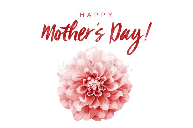 Happy Mothers's Day! red text message and red and white dahlia flower isolated on a seamless white background royalty free illustration