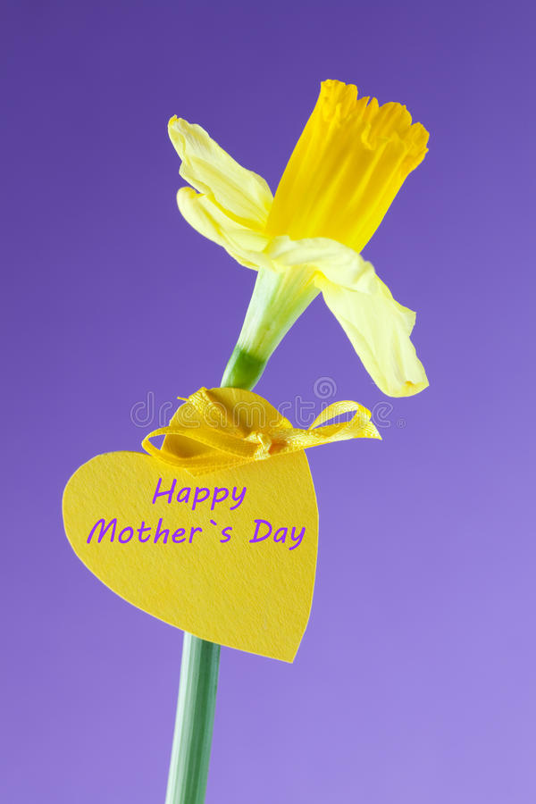 Download Happy mothers day stock photo. Image of spring, blossom - 18183902