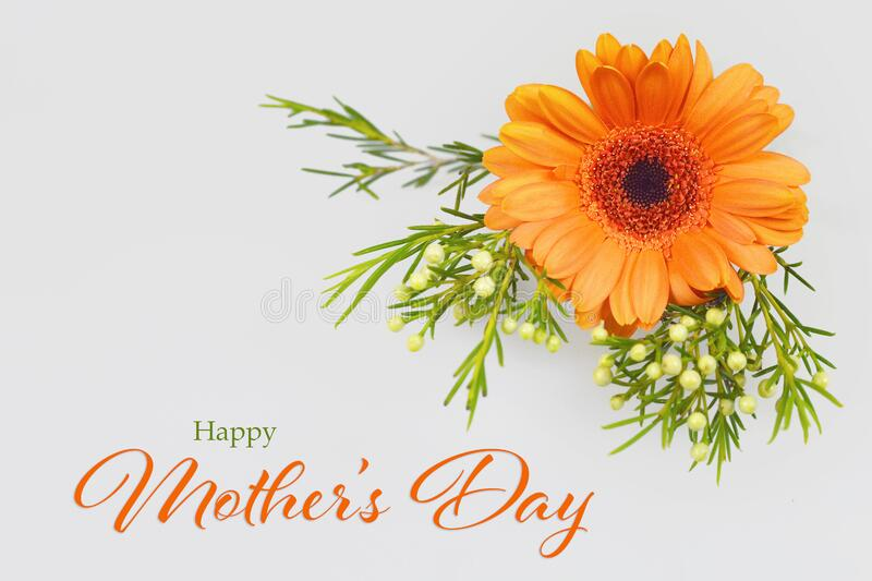 Happy Mothers Day card. Gerbera daisy on grey background. Happy Mothers Day card. Orange gerbera daisy on grey background stock images