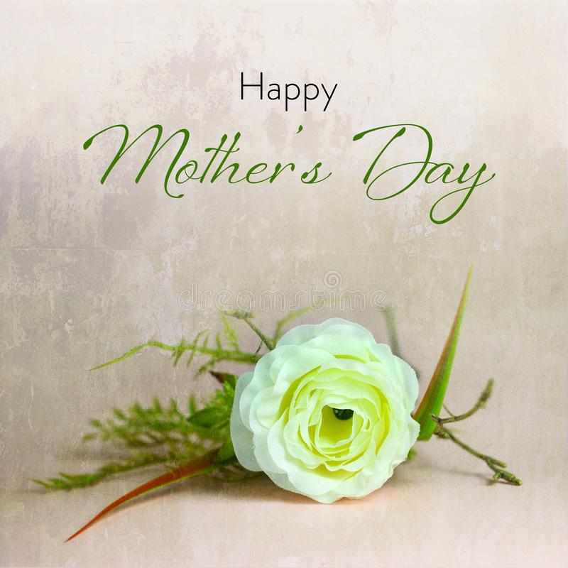 Happy Mothers Day card. White artificial rose on grunge background royalty free stock photos