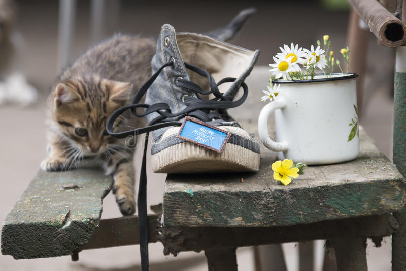 Happy mothers day - inscription and a shoe with a kitten stock images