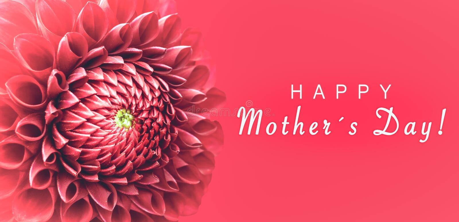 Happy Mothers`s Day! and pink dahlia flower details macro photo as border frame with wide banner background and message text vector illustration