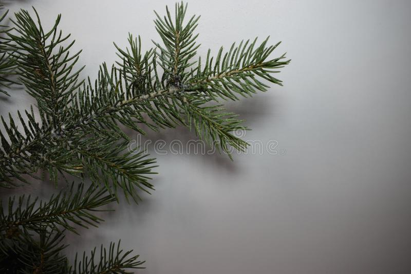 Happy new year and Christmas. New year fir tree green happy new year christmas holiday winter december january happiness needles decorate tree branch needles royalty free stock images