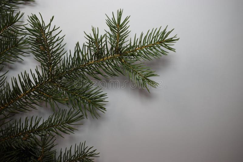 Happy new year and Christmas. New year fir tree green happy new year christmas holiday winter december january happiness needles decorate tree branch needles royalty free stock photos