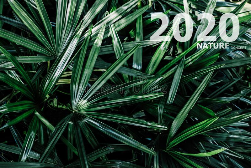 2020 happy new year concept nature environment business symbol green leaf. Background royalty free stock photos