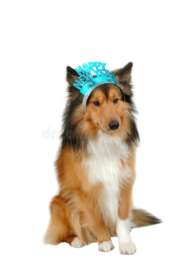 Download Happy new year dog 2 stock photo. Image of animal, dogs - 3583900