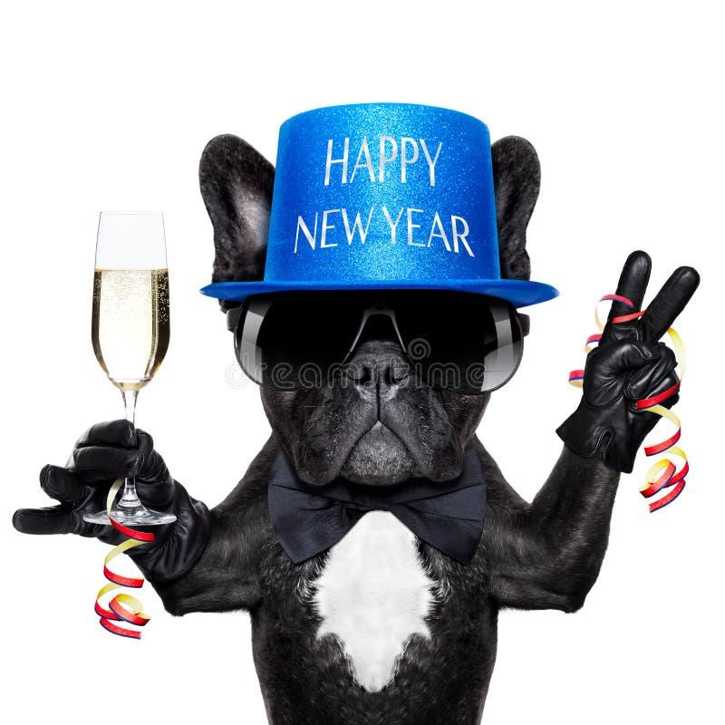 Happy new year dog stock photo. Image of alcohol ...