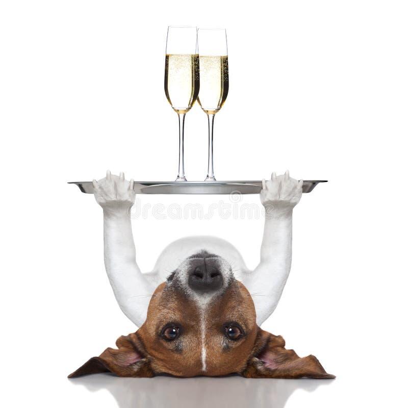 Happy new year dog royalty free stock photography