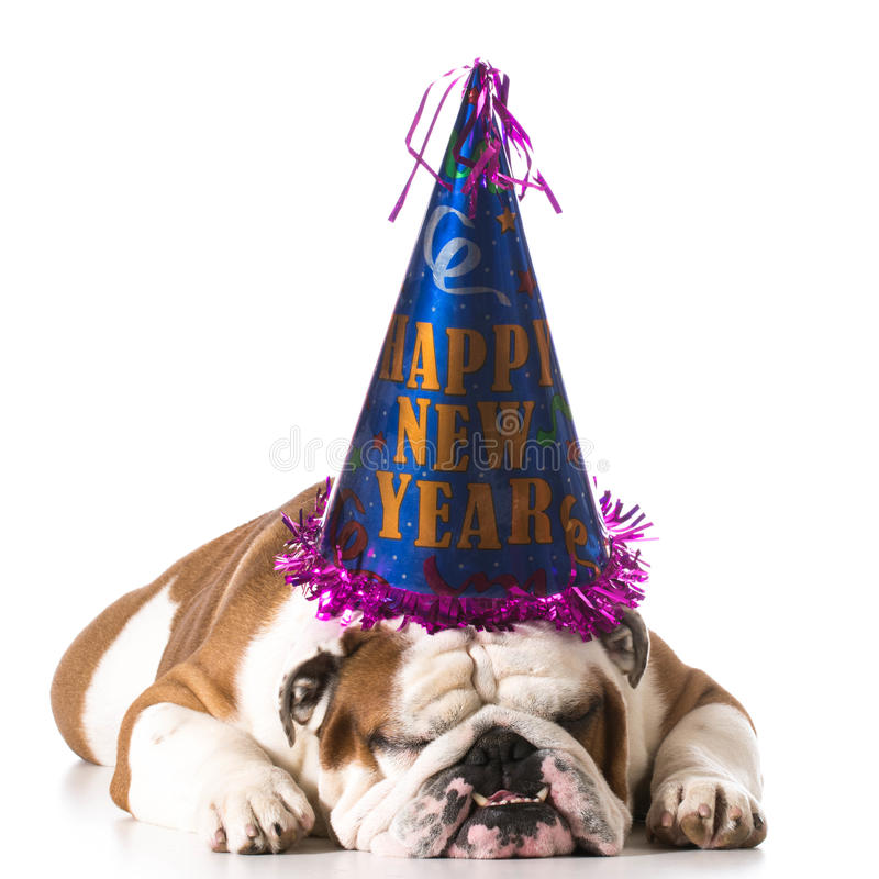 Happy new year dog stock photography