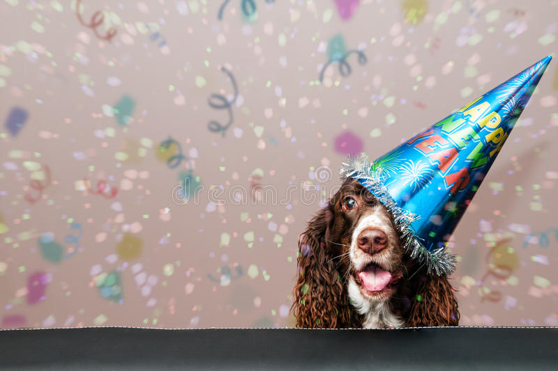 Happy new year dog stock images