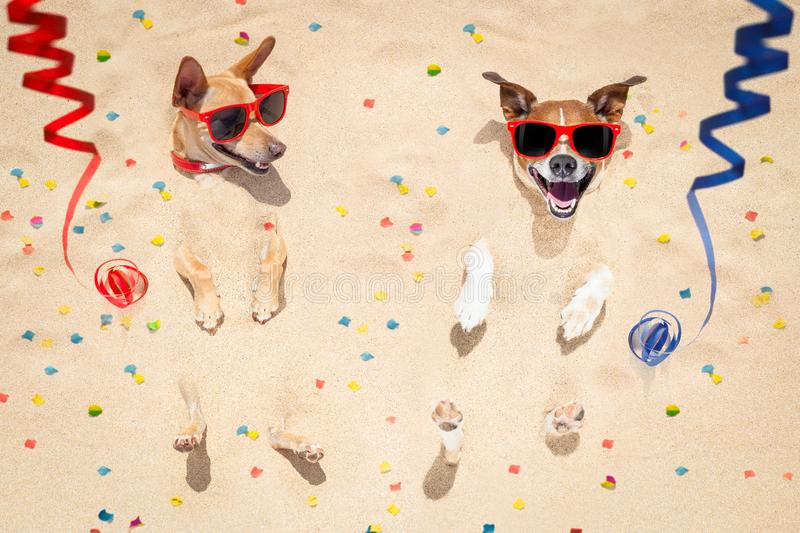 Happy new year dogs at the beach stock photos