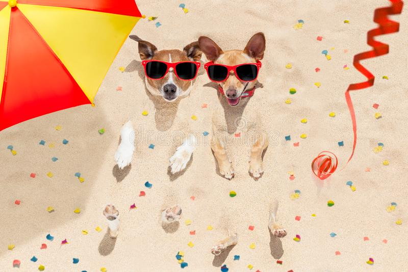 Happy new year dogs at the beach royalty free stock image