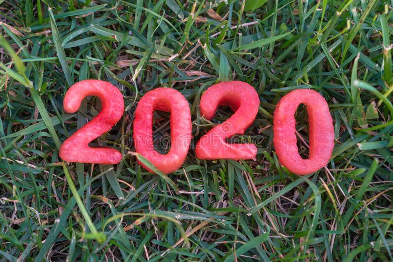 Happy New Year 2020. Figure 2020 from watermelon on the grass.  stock photo