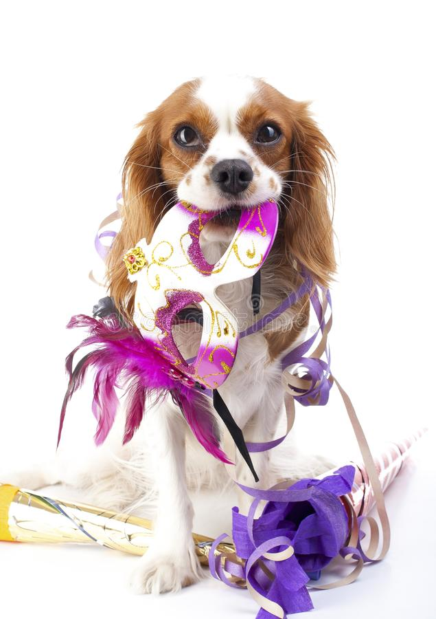 Happy new year! Illustrate your work with king charles spaniel New year illustration. Dog celebrate New year`s eve with. Sylvester trumpet. Doh with mask stock photo