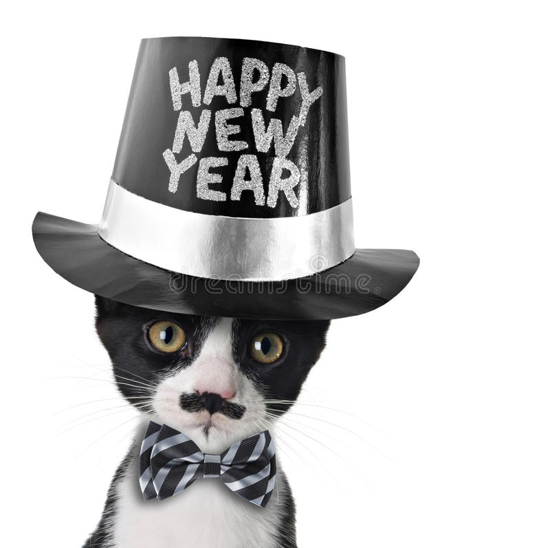 Happy New Year kitten. Cute black and white kitten with moustache, bow tie and Happy New Year hat royalty free stock photos