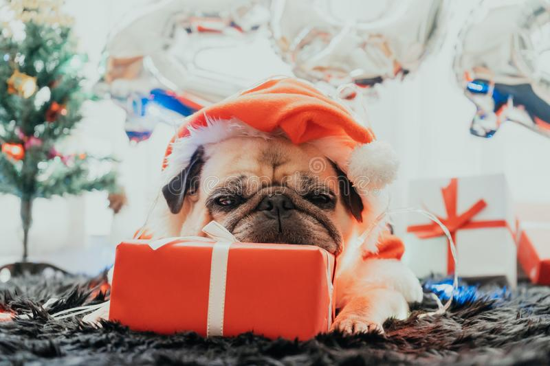 Happy New Year 2020, Merry Christmas, holidays and celebration, Puppy pets bored sleeping rest in the room with Christmas tree. stock image