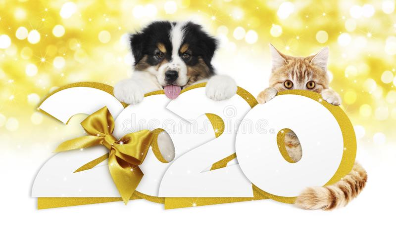 2020 happy new year number text, dog puppy and cat pet with golden christmas ribbon bow isolated on golden blurred lights. Background stock photo