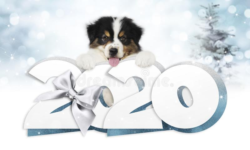 2020 happy new year number text, puppy pet dog with silver christmas ribbon bow isolated on blurred blue lights background.  royalty free stock images