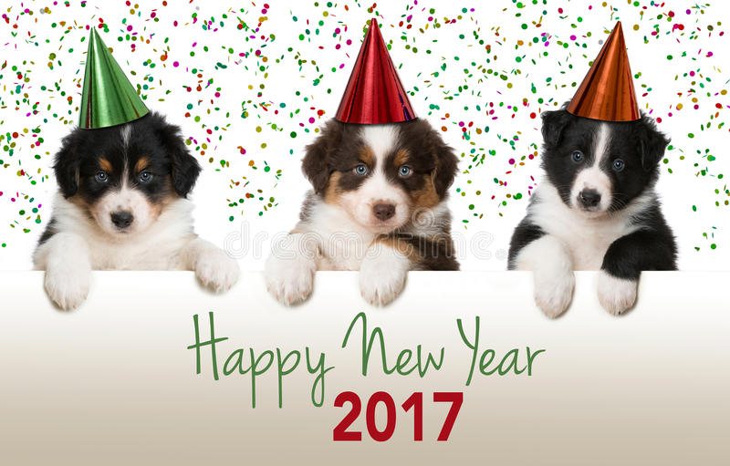 Happy new year puppies royalty free stock photo