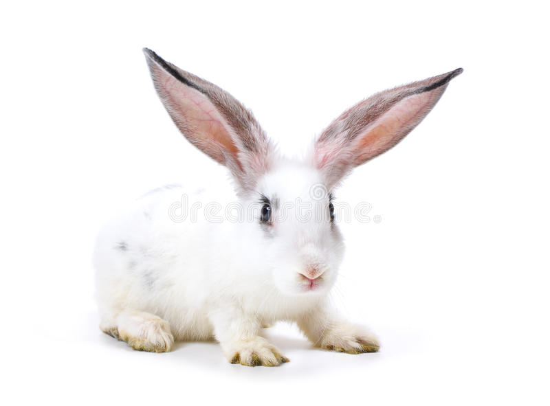 Happy New Year of rabbit. Isolated on a white background royalty free stock images