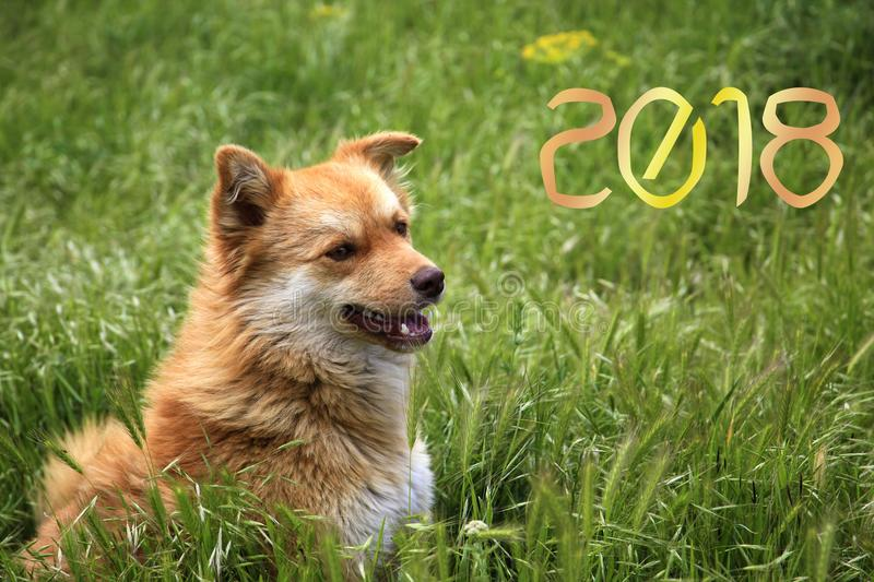 Happy New Year 2018! year of the yellow dog! stock photo