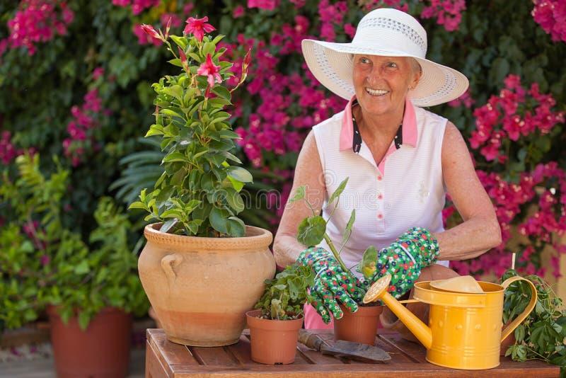 Happy pensioner gardening stock image
