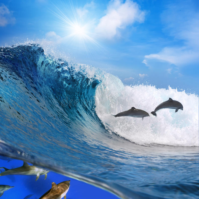 Download Happy Playful Dolphins Jumping On Breaking Wave Stock Photo - Image: 17745600