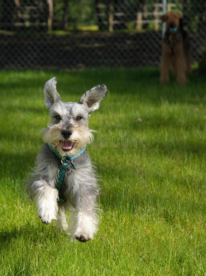 Happy playful small dog outdoors royalty free stock photography