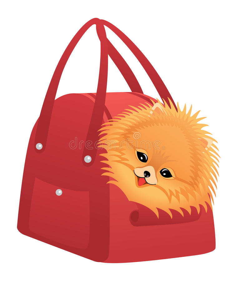 Download Happy Pomeranian spitz stock vector. Image of isolated - 19006205