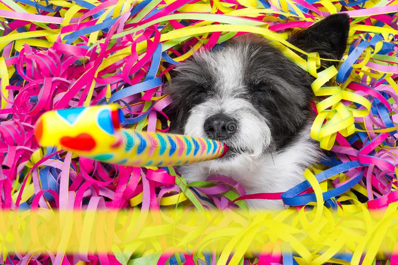 Happy new year dog celberation royalty free stock images