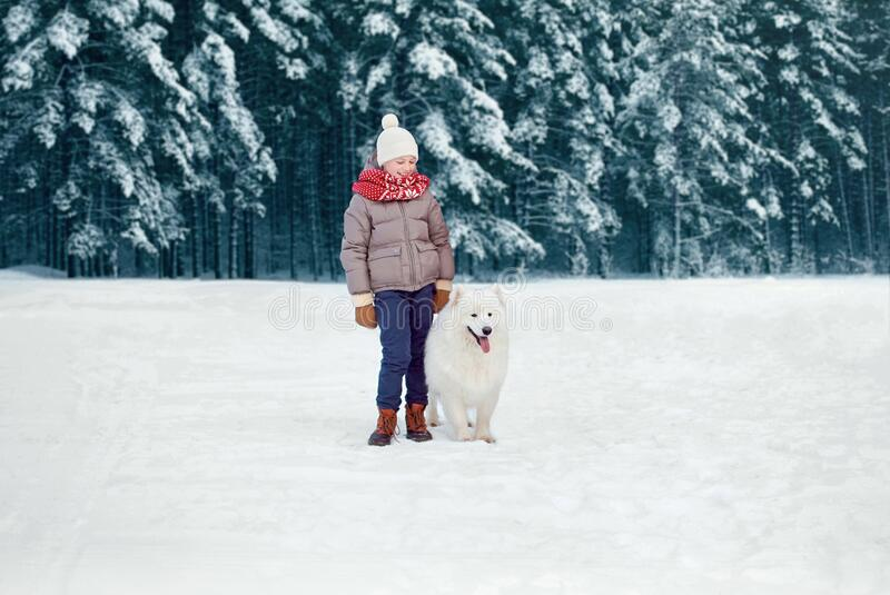 Happy preteen boy walking with his white Samoyed dog in winter snowy day over trees forest royalty free stock images