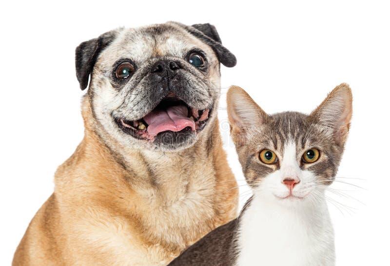 Happy Pug Dog en Cat Together Closeup stock afbeeldingen