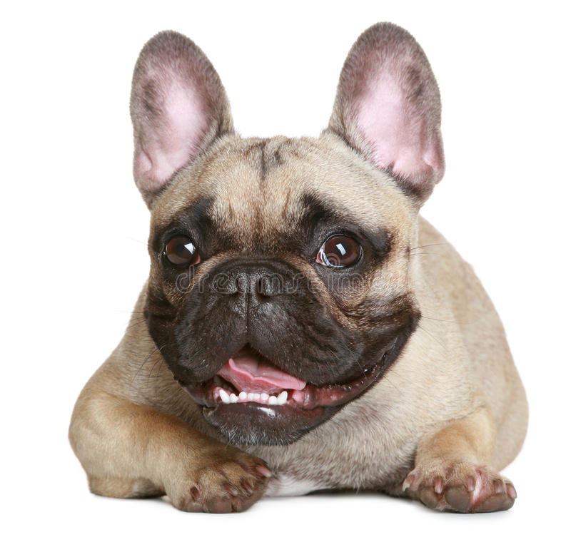 Free Happy Puppy Stock Images - 16475344