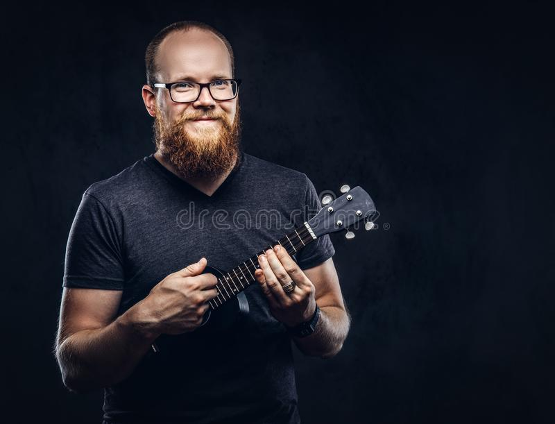 Redhead bearded male musician wearing glasses dressed in a gray t-shirt playing on a ukulele. Isolated on dark textured. Happy redhead bearded male musician royalty free stock photos