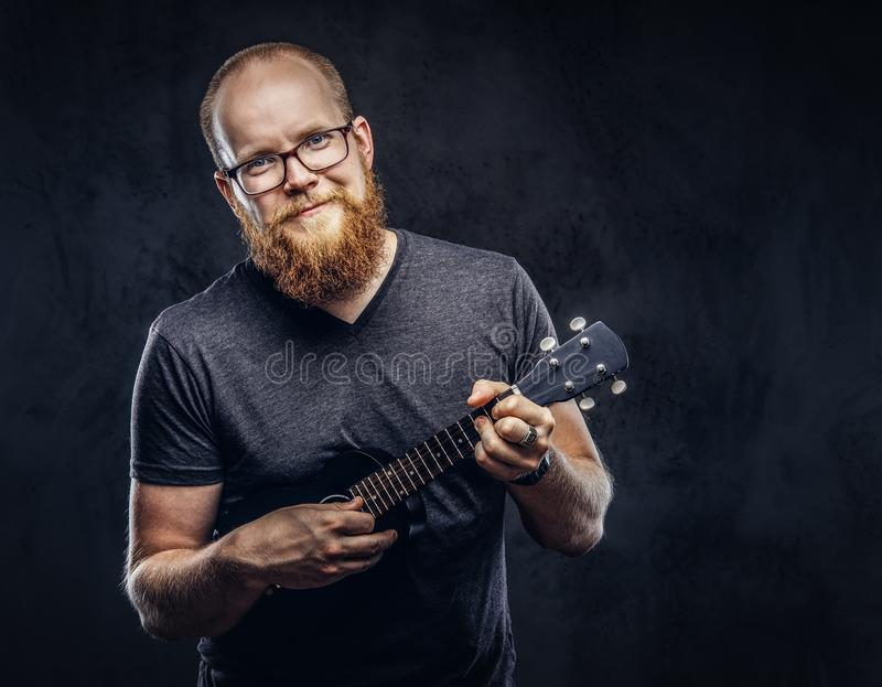 Redhead bearded male musician wearing glasses dressed in a gray t-shirt playing on a ukulele. Isolated on dark textured. Happy redhead bearded male musician stock photos